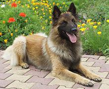zender voor hond